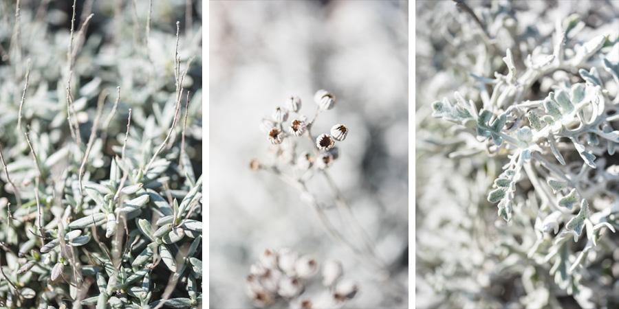plantes callanques